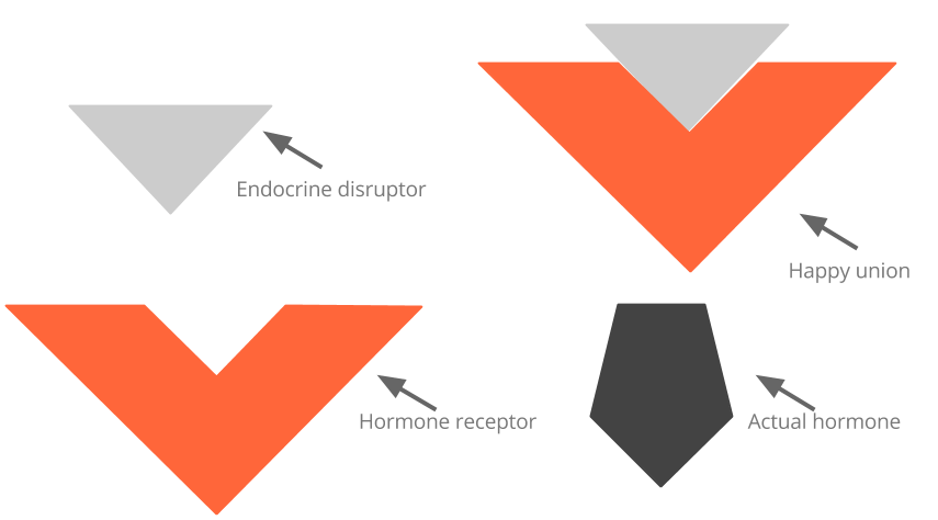 what endocrine disruptors do