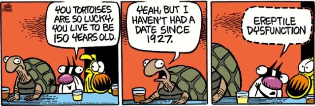 Tortoise-ED