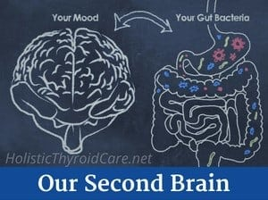Gut Health Second Brain