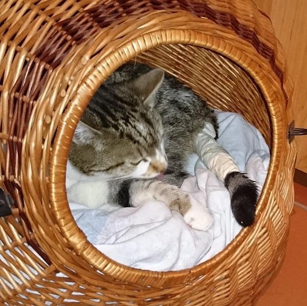 Entzündete Wunde bei Katze heilte sehr schnell dank MMS