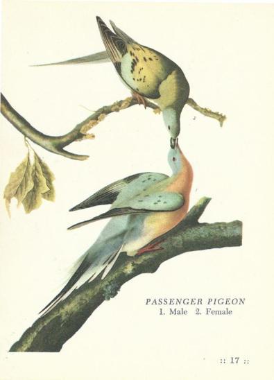 pigeon.jpeg