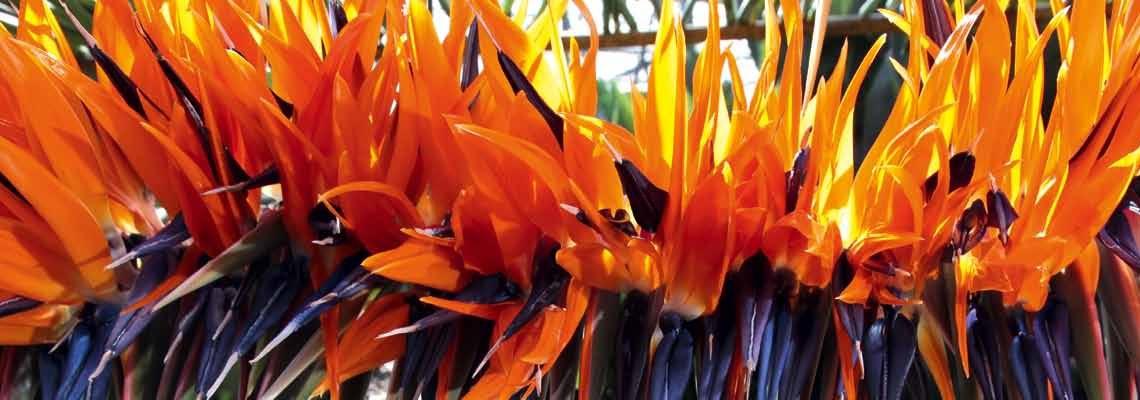 Altijd superverse bloemen door snelle levering.