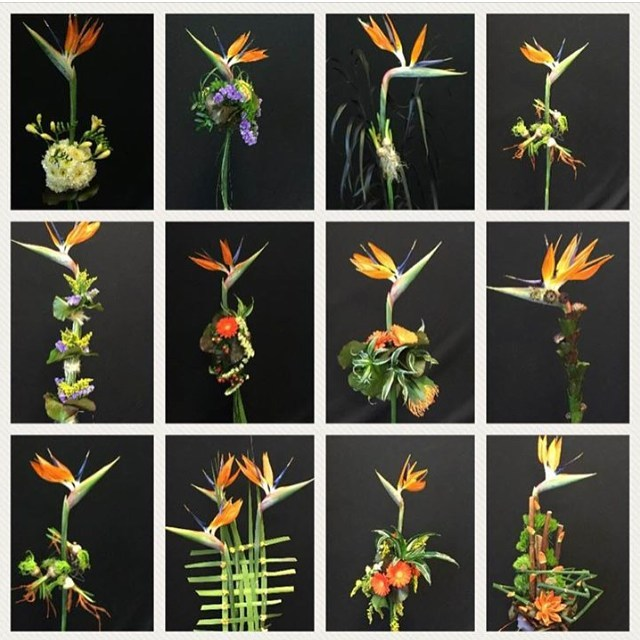 Inspiration by Flower Academy Strelitzias supplied by Holland Strelitzia floweracademyhellip