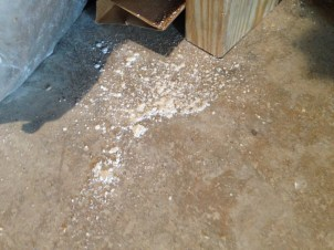 diatomaceous earth sprinkled on the floor