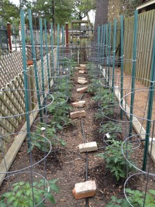 The tomatoes are in the ground - that was hubby's Saturday project!