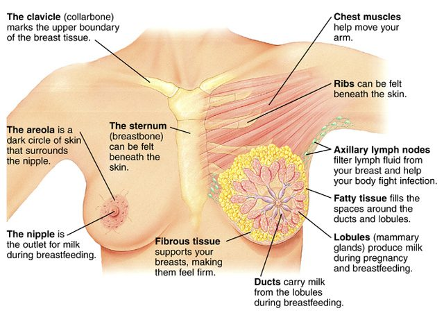 Lymphatic Massage Breast Cancer Prevention