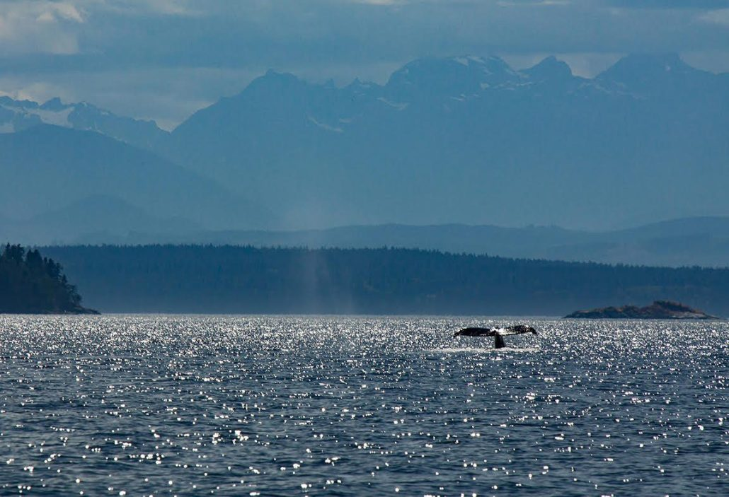 whale tail in the sunlight