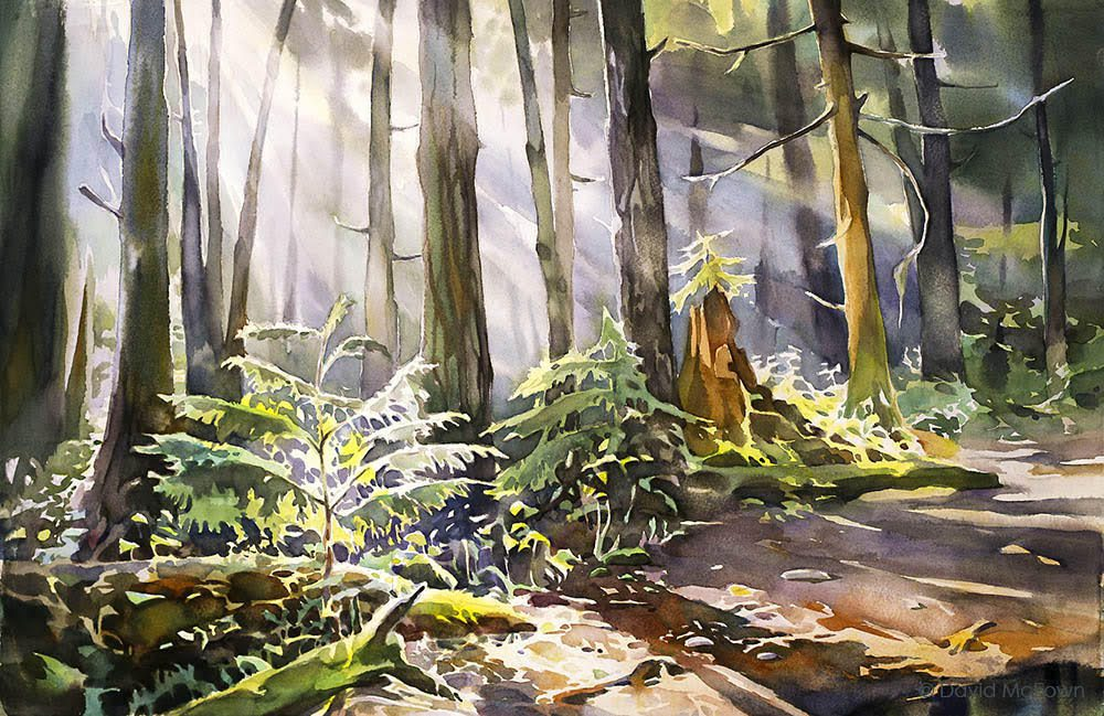 watercolour painting of the forest by David McEown