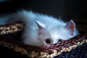 lonely basket kitten