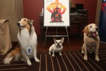 LOS ANGELES, CA - APRIL 29: (L-R) Lassie, Brigitte aka Stella and Clyde aka Marley attend Man's Best Friend: Dogs in Film panel during day 2 of the TCM Classic Film Festival 2016 on April 29, 2016 in Los Angeles, California. 25826_009 (Photo by Jesse Grant/Getty Images for Turner) *** Local Caption *** Lassie; Clyde aka Marley; Brigitte aka Stella