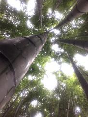 things are looking up at hokokū-ji