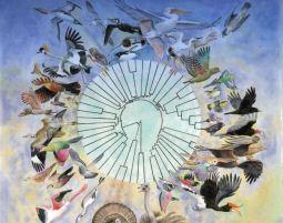 Nyt lys på fuglenes evolution