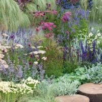 Planter og mennesker og kulturhistorie i Struers haver