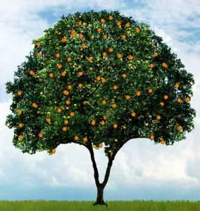 fruit-tree1