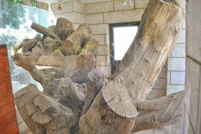 A tree stump with several cut limbs inside a glass enclosure.