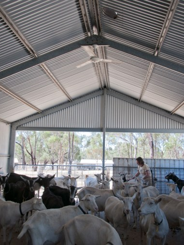 our sheds are airy and comfortable