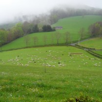 typical bucolic french scene