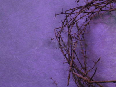half-crown-thorns-purpleWP4.19.19lg
