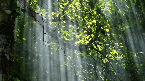 trust god, sunlight streaming through trees