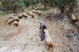 Bethlehem Shepherd - MEJDI Tours