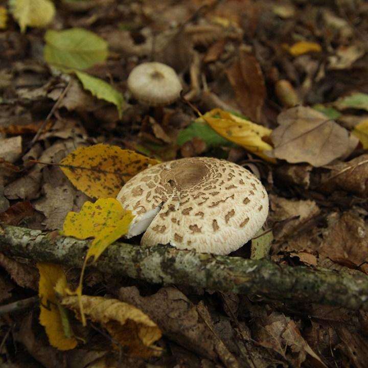 2010_champignons421