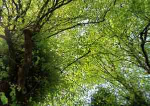 Lime canopy