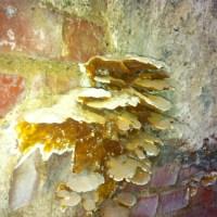 Holzzerstörende Pilze