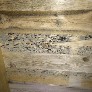 Detail Schimmelbefall im Dachstuhl