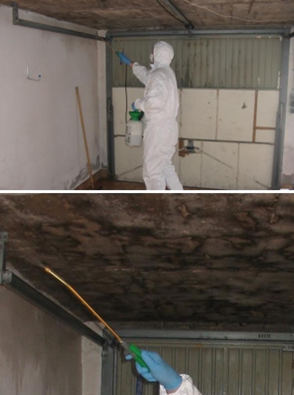 Berühmt Schimmel in der Garage - Sachverständigenbüro für Holz-und HG54