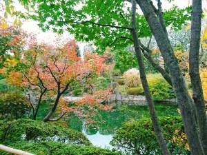 目白庭園 紅葉