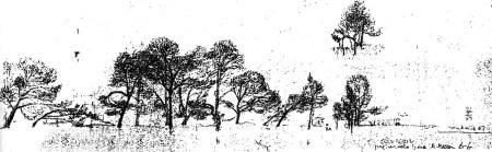 árboles Formentor 1