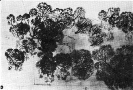 árboles Formentor 2