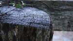 Un tronco húmedo, parte de un cercado