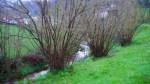 Detalle del jardín de la casa rural Los Riegos, Asturias