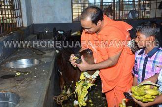 Hombuja-Humcha-Jain-Math-Deepawali-Govu-Pooja-0007