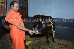 Hombuja-Humcha-Jain-Math-Deepawali-Govu-Pooja-0008