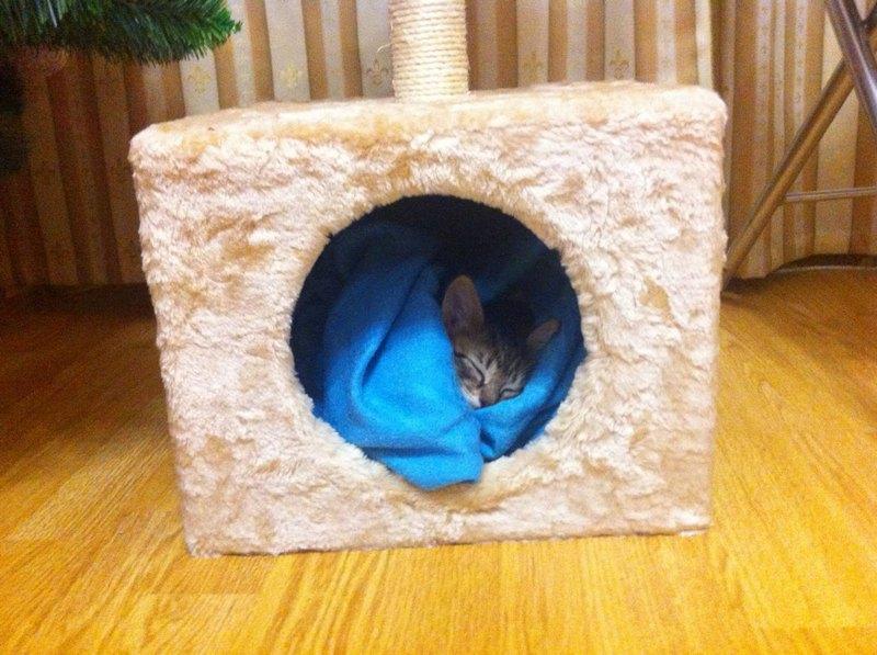 шерстяной комфортный домик