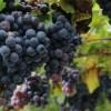 赤ワインのポリフェノールを楽しみながら健康維持する方法