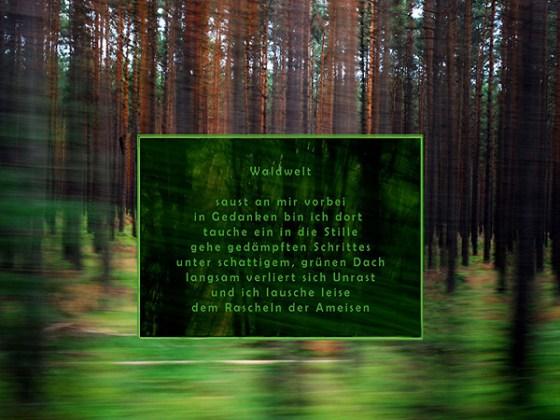 1 Waldwelt