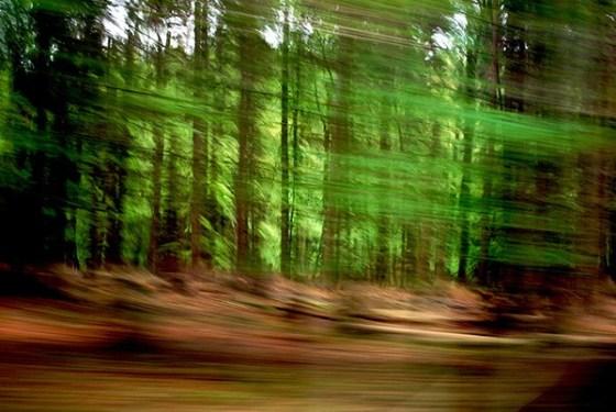 2 Waldwelt