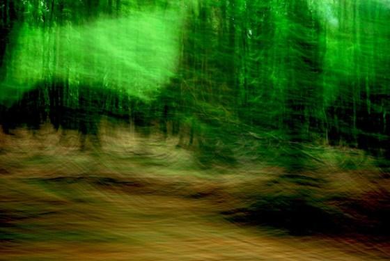 6 Waldwelt
