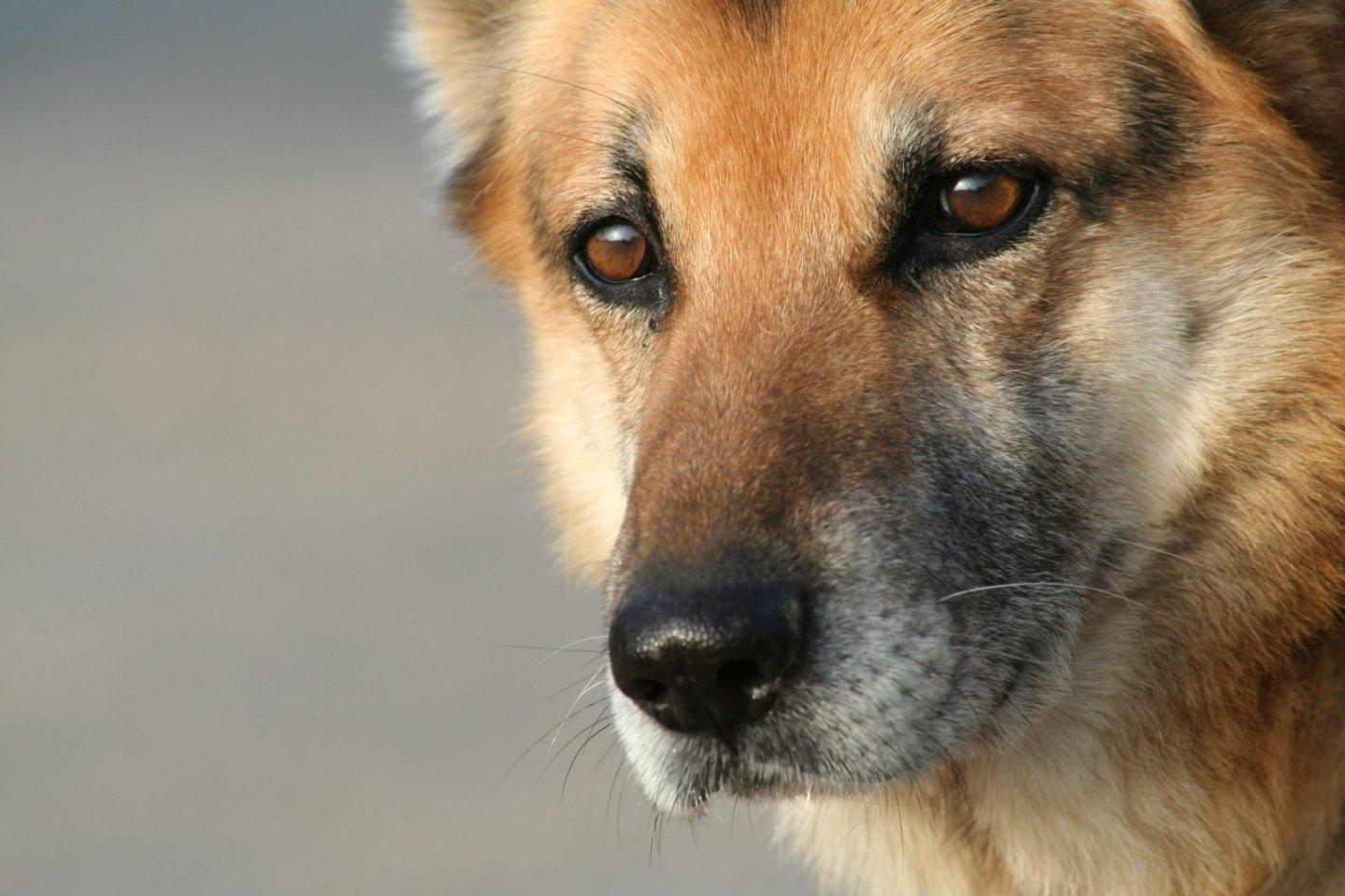 Should pets be vegan?