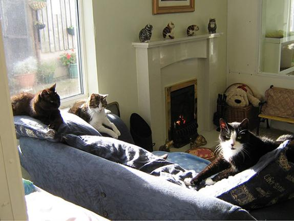 The Lincolnshire Trust for Cats retirement home