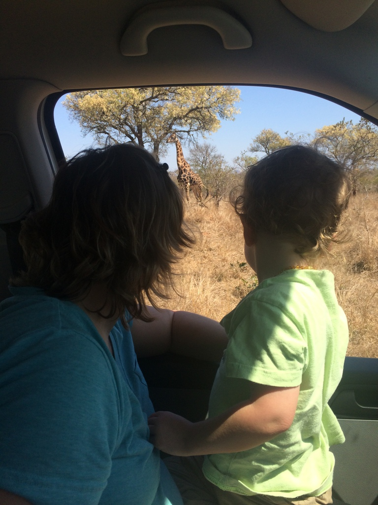 Kruger National Park Safari in the Dry Season