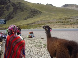 A boy and his llama, hustling tourists for photos.