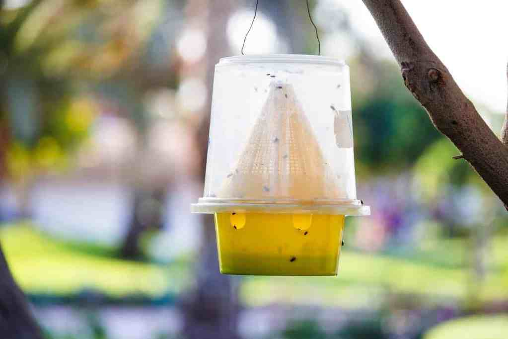 8 best fly and fruit fly traps - DIY fly trap