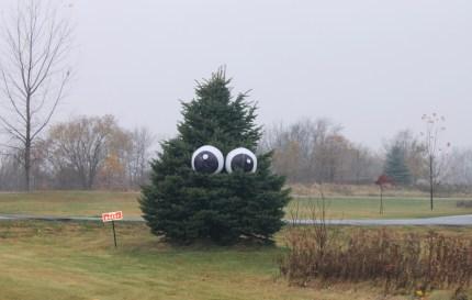 Giant Eyeballs in a Tree