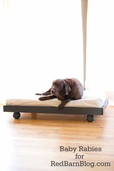 Diy-dog-bed-dog