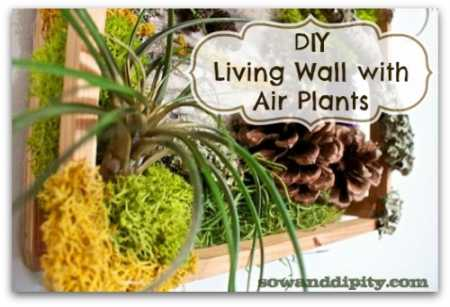 DIY-living-wall-with-air-plants1