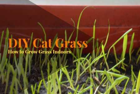 DIY_Cat_Grassjpg